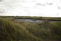 road landscape - Puddle in Field, R.A. Apffel Park, Galveston, Texas    Stock Photo - Premium Rights-Managednull, Code: 700-02200654