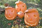 Carved pumpkin faces in garden Stock Photo - Premium Royalty-Freenull, Code: 659-02214139