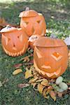 Carved pumpkin faces in garden Stock Photo - Premium Royalty-Freenull, Code: 659-02214141