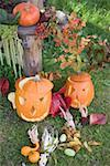 Autumnal garden decoration with pumpkins, corncobs & leaves Stock Photo - Premium Royalty-Freenull, Code: 659-02214150
