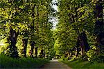 Tree-lined Country Road, Lutjenburg, Plon, Schleswig-Holstein, Germany    Stock Photo - Premium Rights-Managed, Artist: Moritz Schnberg, Code: 700-02216140