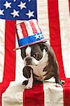 Patriotic Boston terrier dog in hat posing with American flag Stock Photo - Premium Royalty-Free, Artist: Robert Harding Images, Code: 673-02216550