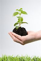Person holding soil and a sapling Stock Photo - Premium Royalty-Freenull, Code: 614-02244250