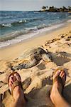 Sea Turtle on Beach near Man's Feet, Hawaii