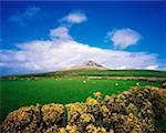 Co Wicklow, Sugarloaf Mountain    Stock Photo - Premium Rights-Managed, Artist: IIC, Code: 832-02253170