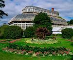 National Botanic Gardens Dublin, Grand Palm House, Early Summer    Stock Photo - Premium Rights-Managed, Artist: IIC, Code: 832-02254070