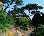 National Botanic Gardens Dublin, The Rock Garden, Mid-Summer    Stock Photo - Premium Rights-Managed, Artist: IIC, Code: 832-02254071