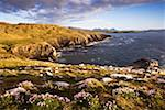 Dunfanaghy, County Donegal, Ireland; Coastal Irish field and seascape    Stock Photo - Premium Rights-Managed, Artist: IIC, Code: 832-02255629