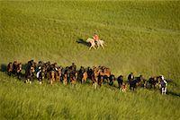 Horseman Herding Horses, Inner Mongolia, China    Stock Photo - Premium Rights-Managednull, Code: 700-02264842