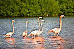 Ria De Celestum birds standing in water, Yucatan, Mexico Stock Photo - Premium Royalty-Free, Artist: ableimages, Code: 625-02268081