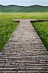 Boardwalk Through Wetlands in the Gurustai Ecological Preserve, Inner Mongolia, China    Stock Photo - Premium Rights-Managed, Artist: dk & dennie cody, Code: 700-02288346
