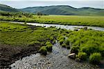 River in Gurustai Ecological Preserve, Inner Mongolia, China    Stock Photo - Premium Rights-Managed, Artist: dk & dennie cody, Code: 700-02288353