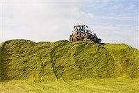 Tractor Piling Corn Silage for Biogas    Stock Photo - Premium Rights-Managednull, Code: 700-02288931