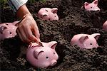 Piggy Banks Planted in Dirt    Stock Photo - Premium Rights-Managed, Artist: Leonardo, Code: 700-02289309