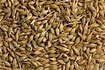 Barley grains , used for animal feed    Stock Photo - Premium Rights-Managed, Artist: foodanddrinkphotos, Code: 824-02296207