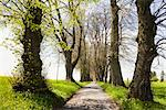 Path Lined With Lime Trees, Marktoberdorf, Ostallgau, Bavaria, Germany    Stock Photo - Premium Rights-Managed, Artist: F. Lukasseck, Code: 700-02346039