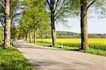 Road Lined With Lime Trees, Bavaria, Germany    Stock Photo - Premium Rights-Managed, Artist: F. Lukasseck, Code: 700-02346083