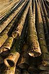 Bamboo, Guilin, China    Stock Photo - Premium Rights-Managed, Artist: dk & dennie cody, Code: 700-02385940