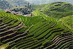Long Ji Rice Terraces, Ping An Village, Longsheng, China