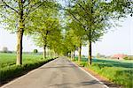 Tree Lined Road, North Rhine-Westfalia, Germany    Stock Photo - Premium Rights-Managed, Artist: F. Lukasseck, Code: 700-02428399