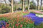 Hyacinths and Tulips in Keukenhof Gardens, Lisse, Netherlands