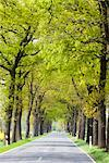 Oak Tree-lined Street, Lower Saxony, Germany    Stock Photo - Premium Rights-Managed, Artist: F. Lukasseck, Code: 700-02428410