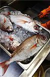 Fish Market    Stock Photo - Premium Royalty-Free, Artist: John Cullen, Code: 600-02429190