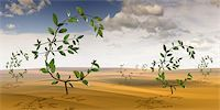 Euro-Shaped Plants Growing in the Desert Stock Photo - Premium Rights-Managednull, Code: 700-02429136