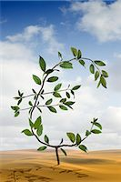 Euro-Shaped Plant Growing in the Desert    Stock Photo - Premium Rights-Managednull, Code: 700-02429137