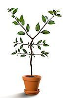 Yen-Shaped Plant Growing in Pot    Stock Photo - Premium Rights-Managednull, Code: 700-02429141