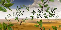Euro-Shaped Plants Growing in the Desert    Stock Photo - Premium Rights-Managednull, Code: 700-02429142