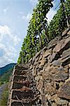Stone Staircase to Vineyard, Ahrweiler, Germany    Stock Photo - Premium Rights-Managed, Artist: Elke Esser, Code: 700-02586159
