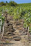 Stone Stairway in Vineyard, Ahrweiler, Germany    Stock Photo - Premium Rights-Managed, Artist: Elke Esser, Code: 700-02586162