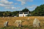 Menhirs in Carnac, Brittany, France    Stock Photo - Premium Rights-Managed, Artist: Jochen Schlenker, Code: 700-02590759