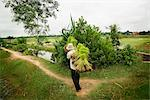 Paddy Fields, Cambodia    Stock Photo - Premium Rights-Managed, Artist: Brian Pieters, Code: 700-02593809