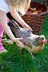 Young girl trying to catch a chicken