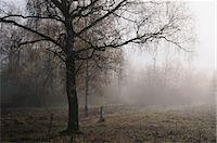 Tree by Field, Schwenninger Moos, Villingen-Schwenningen, Baden-Wurttemberg, Germany    Stock Photo - Premium Rights-Managednull, Code: 700-02633441