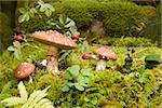 Fly Agaric Mushrooms Stock Photo - Premium Royalty-Free, Artist: Freeman Patterson, Code: 653-02633897