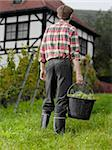 A vintner carrying a bucket of grapes, rear view Stock Photo - Premium Royalty-Free, Artist: Hiep Vu                  , Code: 653-02634607