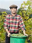 A vintner holding a bucket full of grapes Stock Photo - Premium Royalty-Free, Artist: Hiep Vu                  , Code: 653-02634609