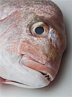 Detail of a red sea bream Stock Photo - Premium Royalty-Freenull, Code: 653-02634884