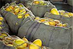Burlap sacks filled with fresh squash Stock Photo - Premium Royalty-Free, Artist: Flowerphotos, Code: 633-02645458