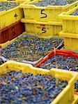 Bins of Blueberries    Stock Photo - Premium Rights-Managed, Artist: Yvonne Duivenvoorden, Code: 700-02669155