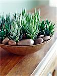 Succulents    Stock Photo - Premium Rights-Managed, Artist: Yvonne Duivenvoorden, Code: 700-02669370