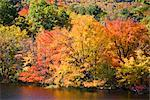Autumn Trees by Lake, Vermont, USA    Stock Photo - Premium Rights-Managed, Artist: Patrick Chatelain, Code: 700-02669718