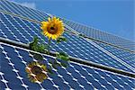 Sunflower and Solar Panels, Bavaria, Germany    Stock Photo - Premium Rights-Managed, Artist: Raimund Linke, Code: 700-02670628