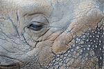 Close-up of Rhinoceros' Eye    Stock Photo - Premium Rights-Managed, Artist: Raimund Linke, Code: 700-02671195