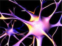 synapse - Nerve cells. Computer artwork of nerve cells, or neurons. Stock Photo - Premium Royalty-Freenull, Code: 679-02681888