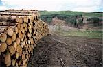 Deforested conifer plantation and harvested logs. Photographed in Perthshire, Scotland. Stock Photo - Premium Royalty-Freenull, Code: 679-02685883