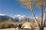 Man Setting Up Tent at Tuttle Creek Campground, Alabama Hills, Lone Pine, Inyo County, Owens Valley, Sierra Nevada Range, California, USA    Stock Photo - Premium Rights-Managed, Artist: Lalove Benedict, Code: 700-02686529